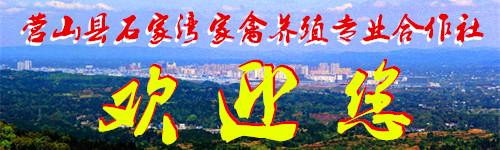 营山全景图.1jpg.jpg